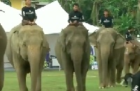 "Elephants playing polo at ""conservation"" event sends all the wrong messages"
