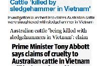 Row prompts fresh calls for animal welfare laws in Vietnam