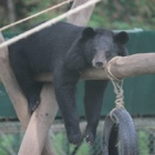 #Moonbearmonday: Joey takes some time out