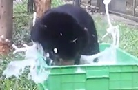 See what happens when sun bear cub Murphy has a bubble bath