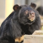 Moon bear's recovery is fruit of compassion