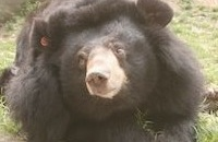 How the legacy of two Swiss animal lovers is still saving moon bears