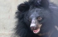 VIDEO: These two abused bears didn't know how to play, but worked it out together, in the cutest way