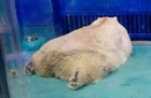 "Pressure increases on ""World's Saddest Zoo"" after Animals Asia report"