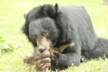 Bear with Jam Jar