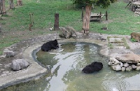 Animals Asia bear sanctuary praised as exemplary by Chinese government
