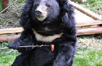 The Bear in the Picture: Franzi