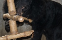 Six incredible rescued bears are starting to believe in love again