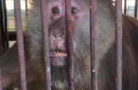 "VIDEO: China's private zoos accused of poaching and ""laundering"" wild animals"