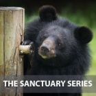 Moon bear friends adapt to change as the neighbours move in