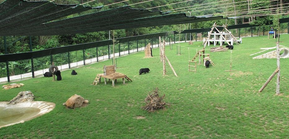 Idyllic footage as rescued bears find sanctuary