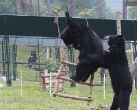 Rescued from bile farms – now their only concern is who's next on the swing (PICS)