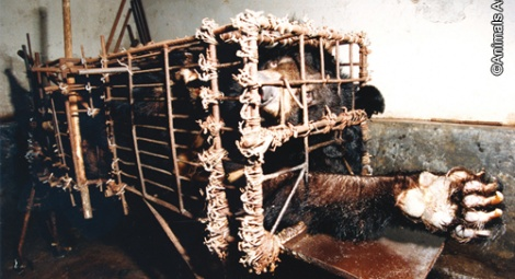 The horrendous conditions at the Huizhou farm