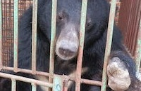 BREAKING: Halong Bay bears set for rescue