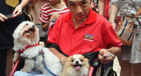 Our Dr Dogs greet their old friend, Xing, at the cat show.