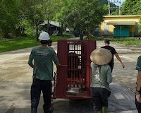 """Lucky 13"" freed as six bear farms are closed in Vietnam"