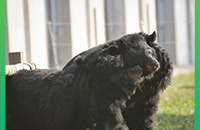Florence and Clara's rescue anniversary: after one year at our sanctuary have their hearts healed?