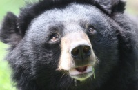 Time and again, this moon bear beat the odds – but last month his luck ran out