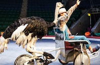 Under pressure circuses say they will end wild animal performance – but ban is still vital for Vietnam