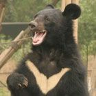 Sanctuary Appeal hits target thanks to bear lovers worldwide