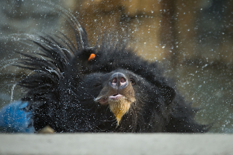 Manuka shakes off the bile farm