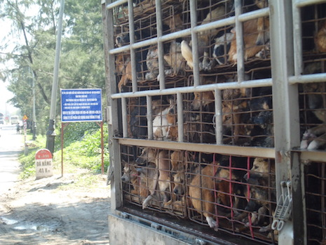 Dogs trafficked in Vietnam