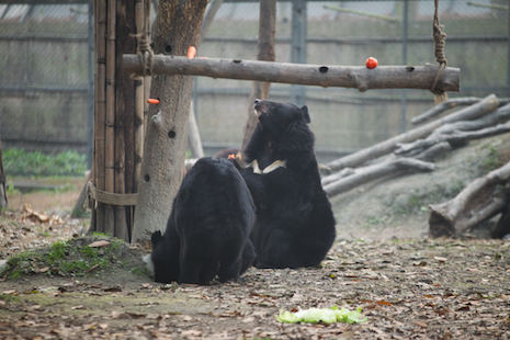 moon bear pals meet for lunch