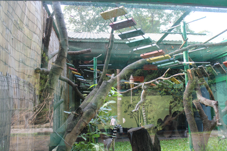 Climbing frame offers greater enrichment