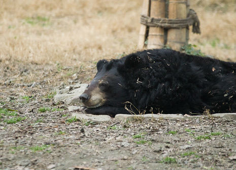 The contented grin of a happy moon bear