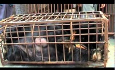 End Bear Bile Farming