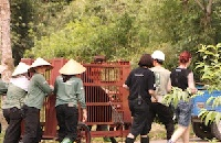 Ten days we'll never forget – two bears rescued, 68 moved and now space for 40 more