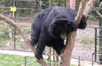 From 4,300 caged bears on bile farms in Vietnam to a future with none