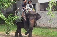 VIDEO: Shocking footage a reminder to NEVER ride elephants on holiday