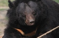 Rescued from a bile farm – now it's Longo's sight that's being saved