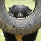 The photos that show bears can enjoy new lives after bile farms