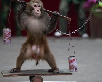 "Let's reclaim the ""Year of the Monkey"" for the monkeys"