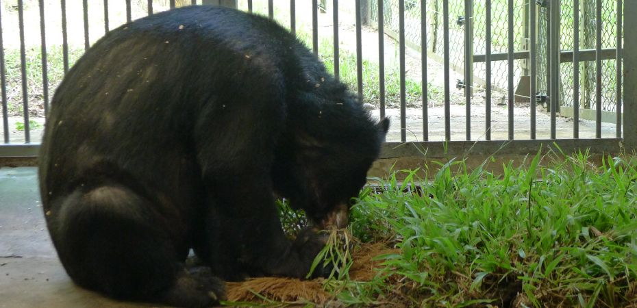 Rescuers and carers say goodbye to gentle bear with a beautiful gift