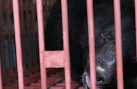 Rescue of sole survivor signals end for horror bear farm