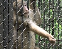 How plastic is killing Chinese zoo animals