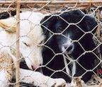 Cat and dog meat trade