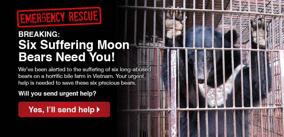 BREAKING NEWS: Mission begins to rescue six bears from bile farm in Vietnam