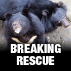 A resort in Vietnam is closing its bear enclosure leaving four bears in need of urgent rescue