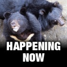 #MoonBearRescue: Follow the rescue live