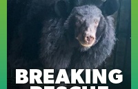 BREAKING: We're going back to rescue trapped bear Cotton Blossom
