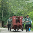 Five bears rescued from years of cruelty on a bear bile farm arrive at rescue centre