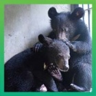 BREAKING NEWS: Two moon bear cubs rescued in time for Moon Bear Day!