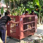 Safe at last: bears rescued from Vietnamese bile farm complete epic journey to sanctuary