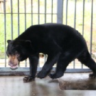 Brave rescued bear's new world is too big – for now