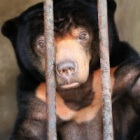Rescued sun bear arrives at sanctuary after 15 years of cruelty