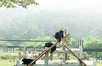 Three more Vietnamese provinces bear bile farm-free after rescues